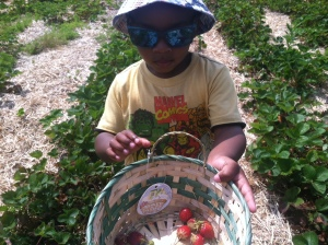 Avant Strawberry picking I