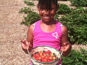 Nashalee strawberry picking