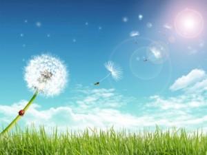 Summer_Day_013451_-440x330