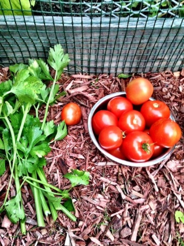 tomatoes and celery