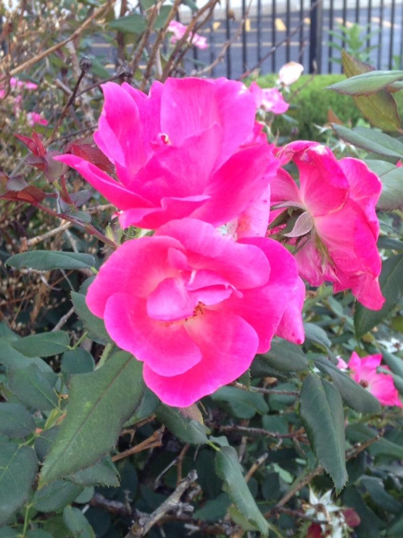 be.beautiful-flower