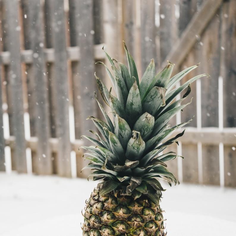 pineapplesnow