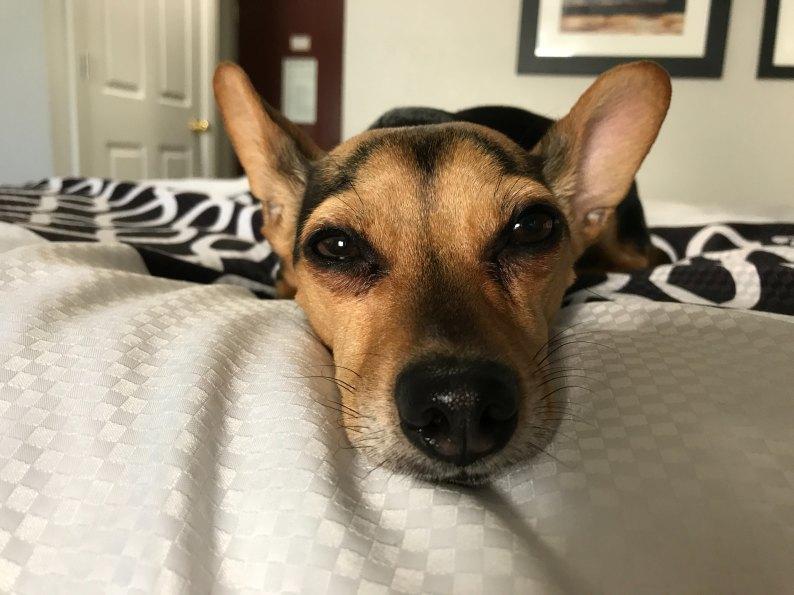 dogsleep